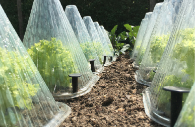 Extending your summer growing season