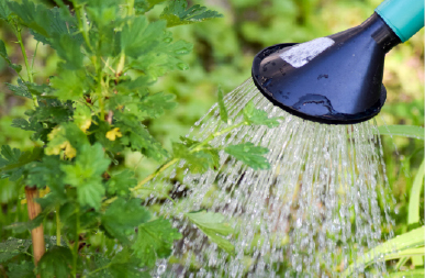 The best way to water your garden